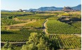 RIOJA : A MYTHIC VINEYARD