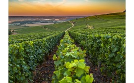 CHAMPAGNE, A DECADE OF GREAT VINTAGES