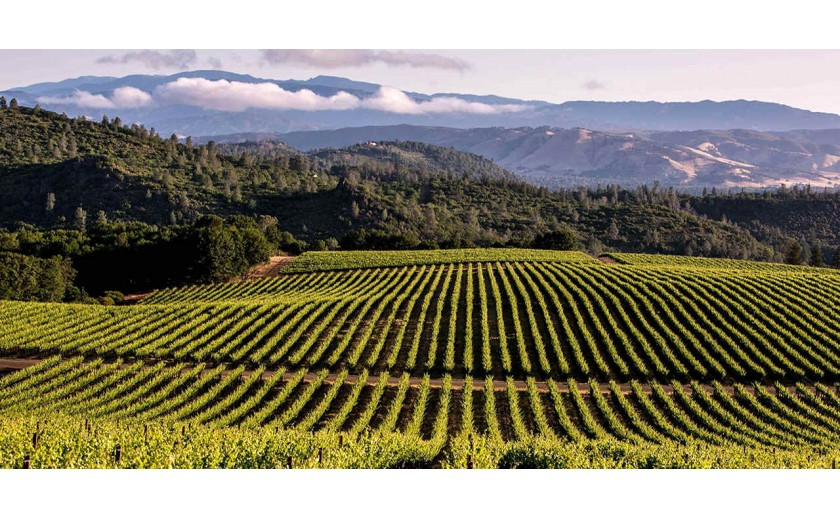 The influence of California wines in the world